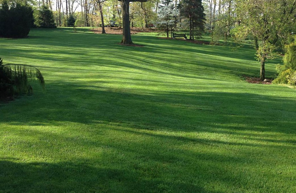 When Should You Aerate Your Pennsylvania Grass?