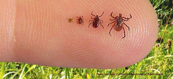 Tips and Tricks about Ticks