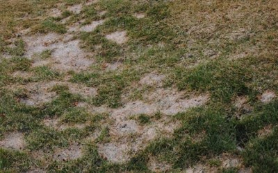 Is Snow Mold a Problem?