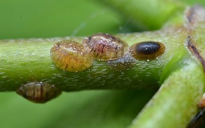 Pennsylvania's Most Wanted: The Springtime Pests at the Top of Our List