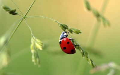 Guardians of the Garden: The Benefits of Beneficial Insects
