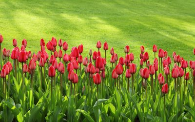 Your Top Spring Landscaping Questions Answered