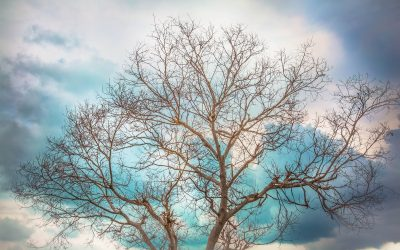 Brace Yourself: The Truth About Tree Stability