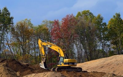 Tree Preservation Tips During Construction