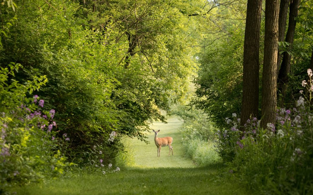 A Guide to Deer Barriers and Repellents