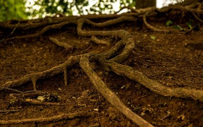The Lowdown on Root Care