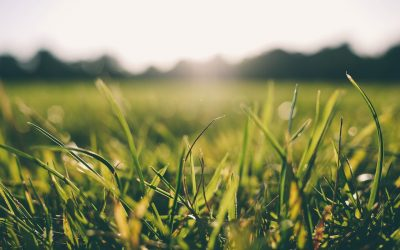 Get Your Lawn Summer Ready
