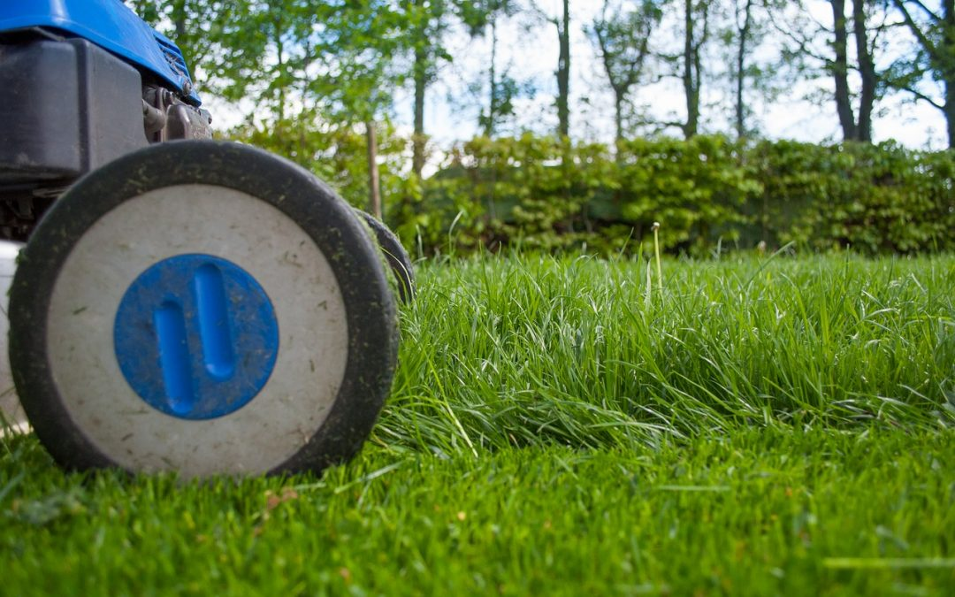 The Magic of Lawn Fertilization (When, Why, and How)