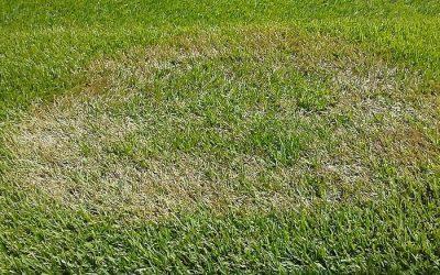 Identify Your Lawn Problem