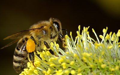 Seven Reasons to Love Bees