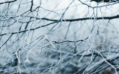 Our Definitive Landscape Winter Checklist