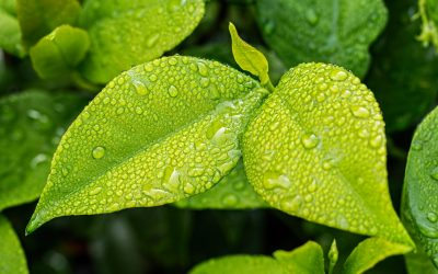 How Much Should You Be Watering Your Plants?
