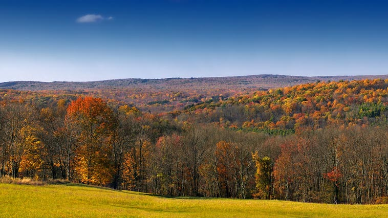The Best Pennsylvania Trees for Fall Colors