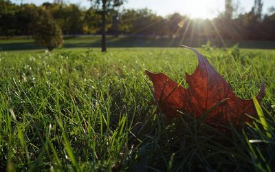 What to Do with Your Lawn in the Fall