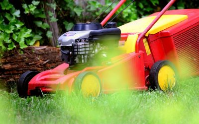 Quick Facts about Lawn Care