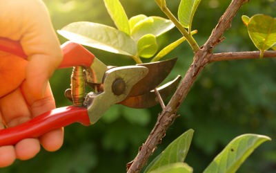 Beware of Improper Pruning!