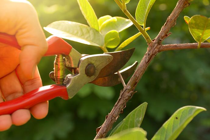 Beware of Improper Pruning!