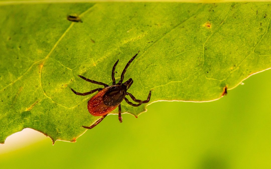 The Worst Fall Pests in Pennsylvania