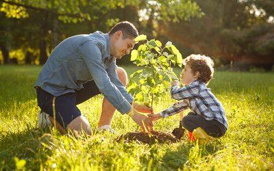 Better Soil = Better Plants