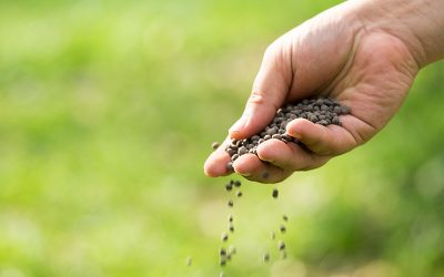 Lawn Fertilization Should be Left to the Experts